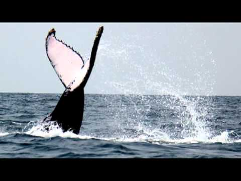 Whale Watching Libreville Gabon