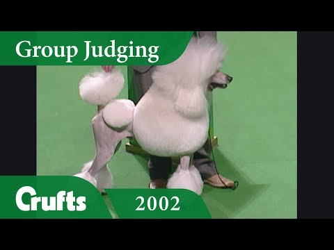 Standard Poodle wins Utility Group Judging at Crufts 2002