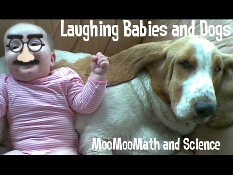 Laughing Babies,Dogs, and Cats