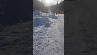 Невская маскарадная. Кот Юнон в Белокурихе.
