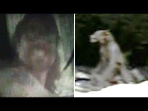 Video - 4 Real Life Dogman Sightings & Encounters