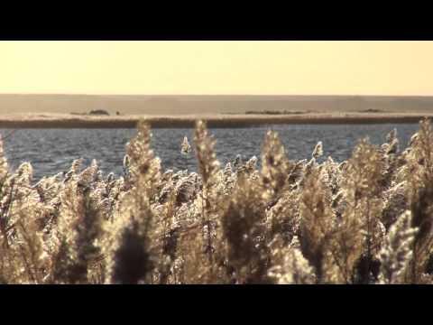 2010年秋 內蒙 額濟納旗: 居延海 Juyan Lake