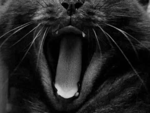 я твоя кошка.....