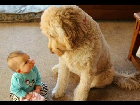 Thumbnail: FUN CHALLENGE: Try NOT to laugh - Funny & cute dogs and kids