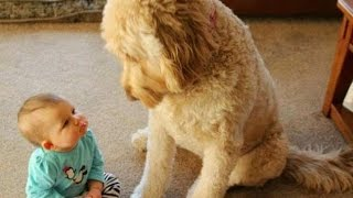 Funny & cute dogs and kids