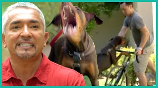 Powerful Doberman Attacks Man on Bike | Cesar 911