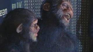 Heidi Klum Monkey Halloween Costume.Heidi Klum Seal Visit The Planet Of The Apes For Halloween Youtube