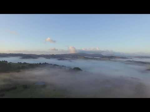 Misty Morning Towai, New Zealand