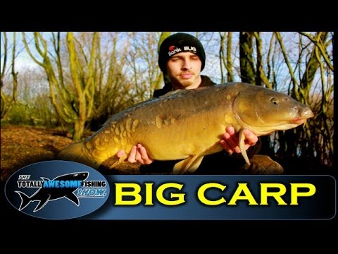 Winter fishing tips for BIG CARP! - TAFishing Show