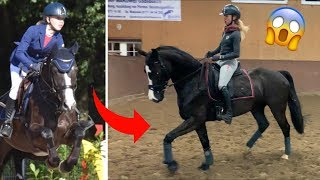 JUMPING HORSE TRIES DRESSAGE || Fayvourite Horse