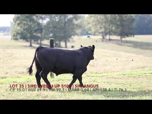 Edgewood Angus Lot 35