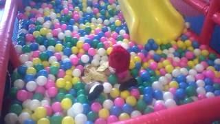 lagu anak balonku ada lima  bermain sambil bernyanyi