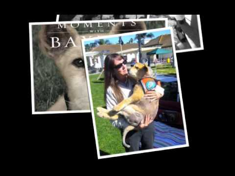 Moments with Baxter - Tribute To The World's Best Therapy Dog