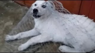 Поймала щенка и отвезла к себе в приют