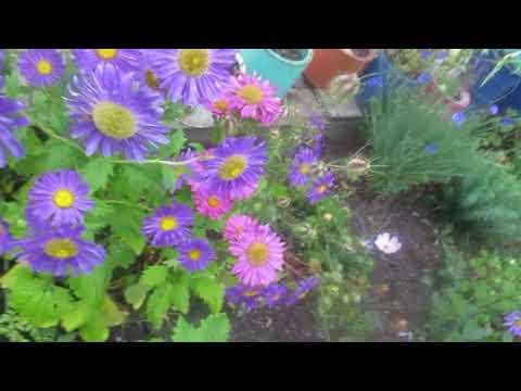 Цветы на садовом участке на Урале.