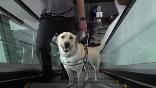 Guide Dogs Australia at MCEC
