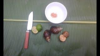 Ăn thử Ốc Sên tái chanh / món ăn dị