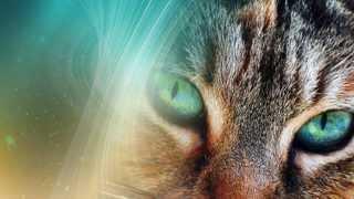 Магия кошачьих глаз