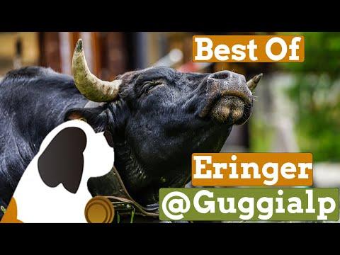 Best Of Eringer