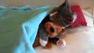 Самый милый кот в мире!.mp4