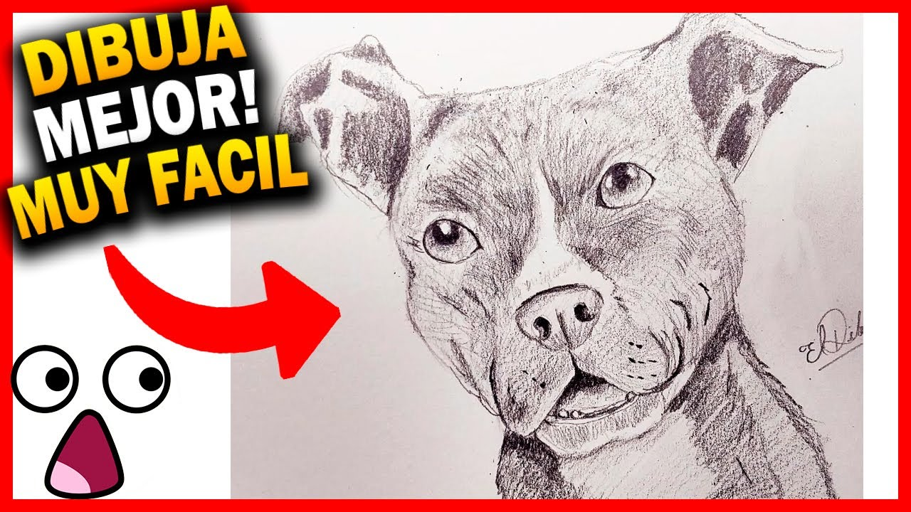 How To Draw A Pitbull Dog Easy Step By Step Realistic To Pencil Drawing Course