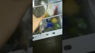 Cat in the fridge (GONE SEXUAL) ALMOST DIED GHOST HUNTING