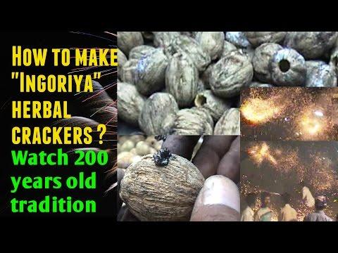 "How to make ""Ingoriya"" herbal crackers in diwali ?  200 years old unique tradition in Savarkundla"