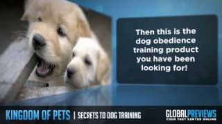 How To Train Dogs And Housebreaking Puppies