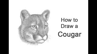 How to Draw a Cougar / Mountain Lion (Head Detail)