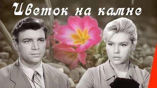 Цветок на камне (1962) фильм