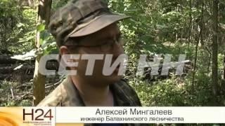 Из-за аномально жаркой погоды паразиты оккупировали нижегородские леса!