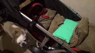 シニア犬用バギーの最安値は、こちら↓↓ http://dogstroller.jp/ 目の見...