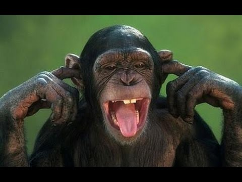 Aren't monkeys just the funniest? - Funny monkey compilation