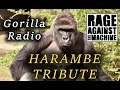 Capture de la vidéo Harambe Tribute - Gorilla Radio - (Rage Against The Machine)