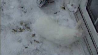 Honey Bunny playing in the snow