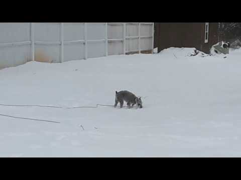 Stupid dog in the snow!!!!