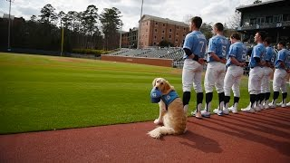 A dog in the dugout thumbnail