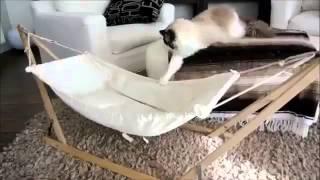Кот на гамаке! Смешное видео
