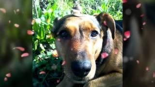 Моя собака Джесси