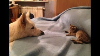 Abandoned Kitten Searches For A Dad, Then Finds Alto The Dog