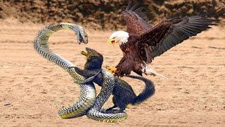 У Него Не Было Шансов Битвы Животных Снятые на Камеру