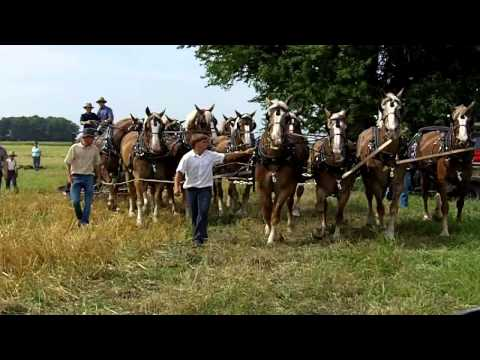Amish 12 Horse Hitch Pulling a 4 Bottom Plow