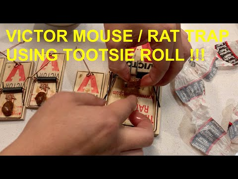 Setting Up VICTOR Mouse / Rat Trap Using TOOTSIE ROLLS As Bait
