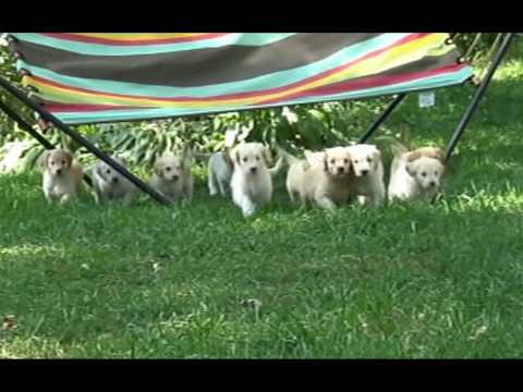 Puppies Call to Dinner.wmv