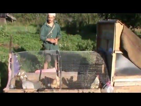 видео: Курятник на даче своими руками