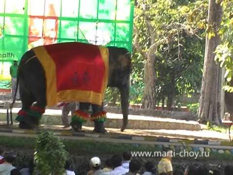 Myanmar. Yangon. Zoo. 2011г. (Янгонский зоопарк)