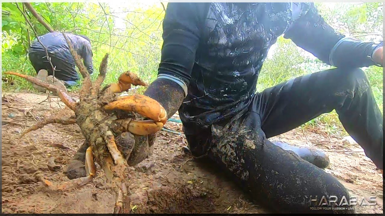 EP389-Part1 - Land Crab Hunting   Catch and Wild Cook   Occ. Mindoro