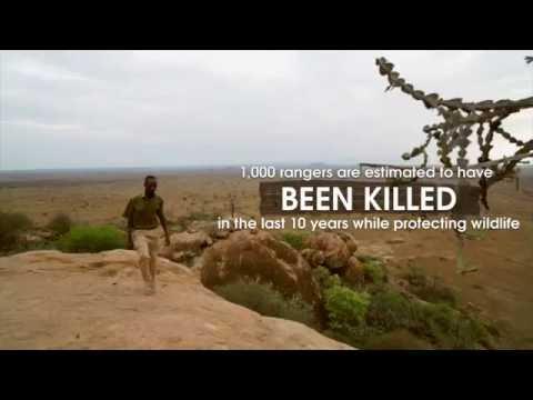 The illegal wildlife trade