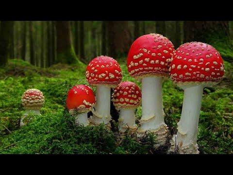 Как растут грибы! Приятное видео