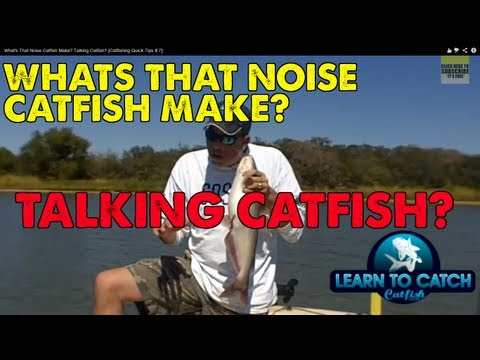 Does Soap Work As Catfish Bait? from YouTube · High Definition · Duration:  16 minutes 30 seconds  · 284,000+ views · uploaded on 4/18/2015 · uploaded by muddyrivercatfishing